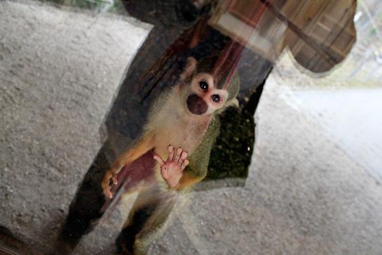 tiny-cute-monkey