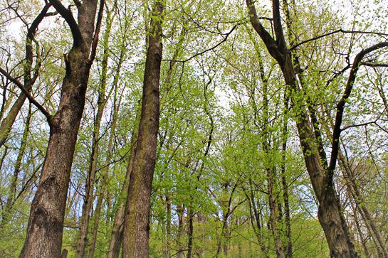 random-joy-spring-green