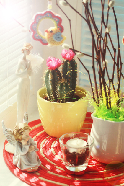 cactus with pink flower in yellow pot