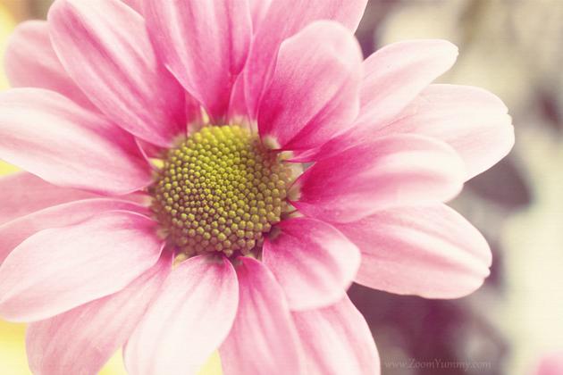free-flower-desktop-wallpapers